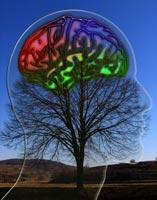 Kognitive Verhaltenstherapie: Veränderungen im Gehirn nachgewiesen