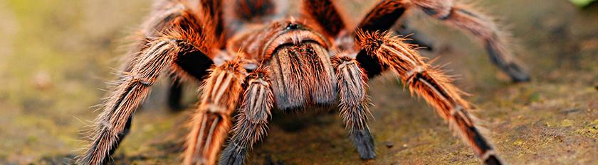 Die bekanntesten Phobien sind jene, die sich auf Tiere beziehen, wie beispielsweise Spinnen oder Schlangen.